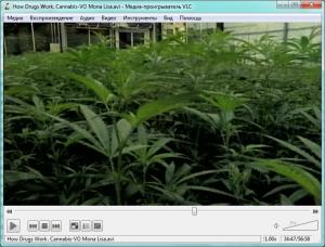 Программа для просмотра видео VLC media player